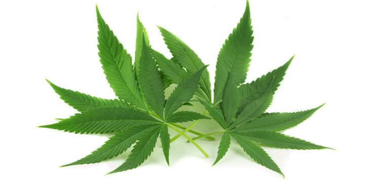 薬物乱用における大麻(マリファナ、ハシシ など)とその危険性の写真