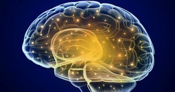 てんかん発作は、脳の部位によって沢山の種類があるの写真