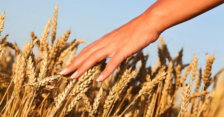 食物繊維は乳がんを予防するか?の写真