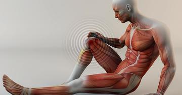 変形性膝関節症の痛みや活動制限には、全身振動療法と筋トレが有効?の写真
