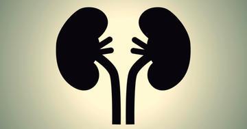 タクロリムスで免疫を弱くすると腎臓の病気が治る?の写真 (C) LynxVector - Fotolia.com
